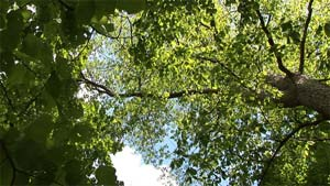Summer trees are very relaxing.