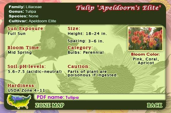 Flower reference menu