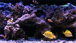 Wideshot of a saltwater video aquarium - rock coral, very rare.