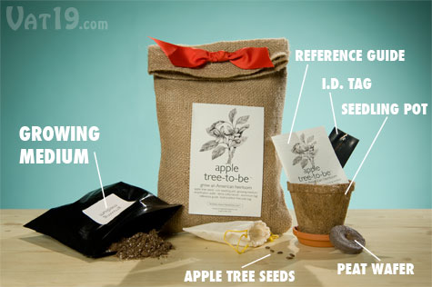 The Apple Tree-to-Be Kit comes with everything you need to grow your own apple tree, including growing medium, Ralls Janet apple seeds, a reference guide, an aluminum i.d. tag, a seedlign pot, peat water, and terra cotta saucer.