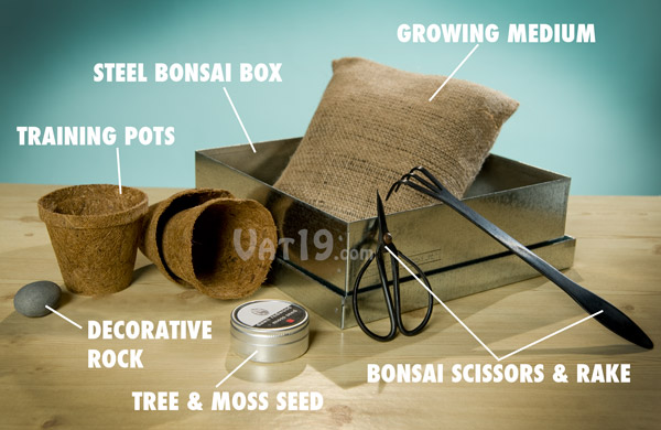 The Dawn Redwood Bonsai Tree Kit includes everything needed to grow your own bonsai forest.