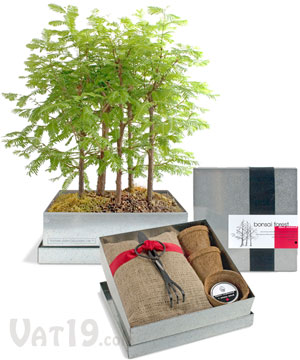 Grow Your Own Bonsai Tree Kit
