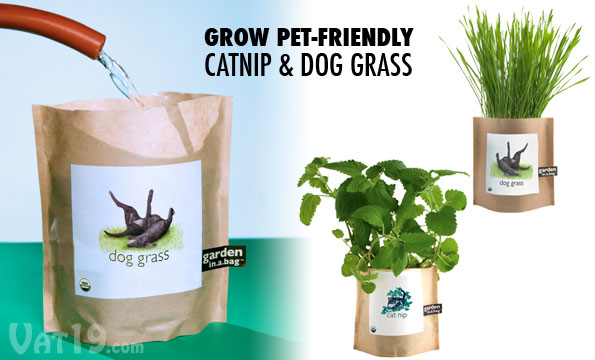 Just add a little water and sunlight to grown your own cat nip and dog grass.