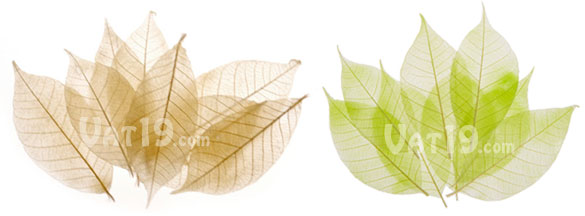SoapLeaves are available in ivory and green